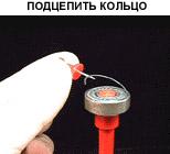 Подцепить кольцо
